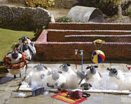 Flock take bath