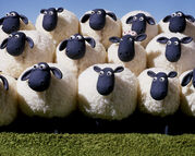 Flock2