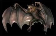 File:Infected bat.jpg