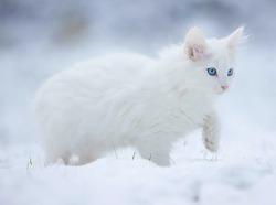 File:Snowybirdie.jpg