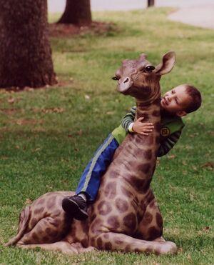 Baby Giraffe With Boy