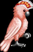 LovebirdMaleD