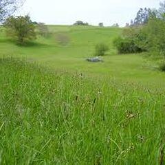 Mandarran Plains
