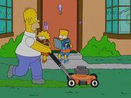 Homerazzi 50