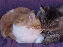 File:Araseth's cats.jpg