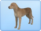 File:Breed-l62.png