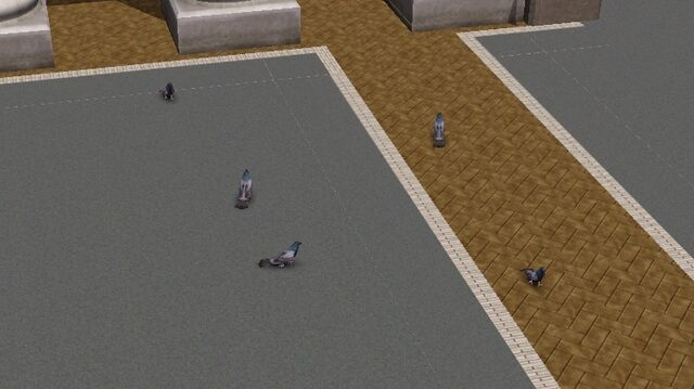 File:Bridgeport pigeons.jpg