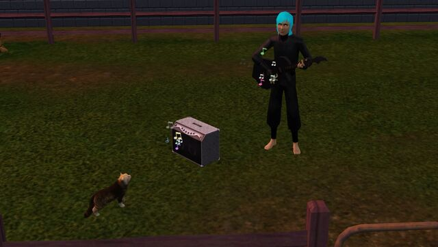 File:Cat and sim.jpg