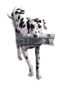 Dog newspaper TS3