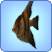 File:Angelfish.png