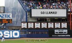 Go Llamas!