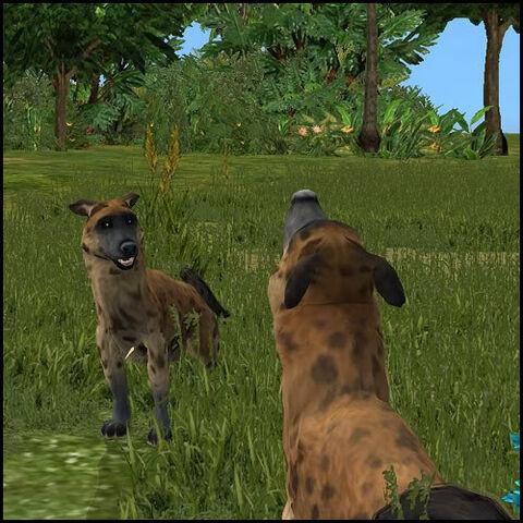 File:Hyena 1.jpg