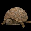 File:Pygmy Tortoise.png