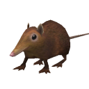 File:Shrew.png