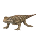 File:Texas Horned Lizard.png
