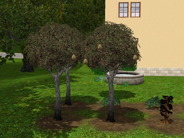 File:Money-tree-2-ts3.jpg
