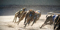 London Underworld/Catford Dog Racing Stadium
