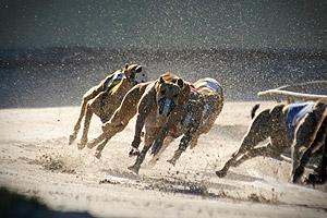 File:Dog-racing track stock photo.jpg