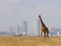 File:Giraffe - Skyline - Nairobi - Park Nairobi.jpg