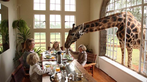 File:Giraffe-Manor Nairobi.jpg