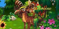 Zebroose