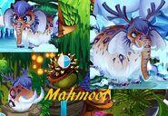 Mahmoot bb