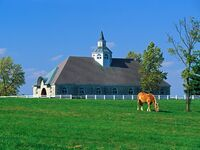 Horse-Farm Kentucky