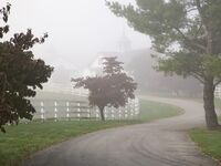 Horse Farm Lexington