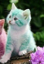 Colored-kittens -2