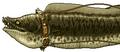 Thumbnail for version as of 22:29, September 5, 2008