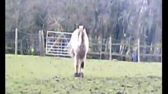 The Horses of Tyksrr