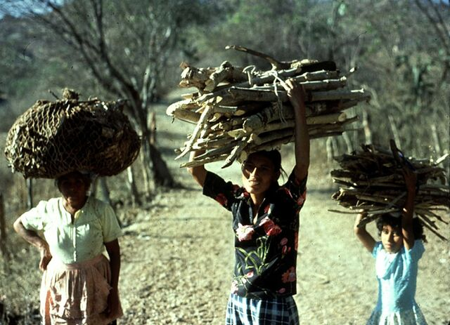 File:Collecting Fuelwood in Guatemala.jpg