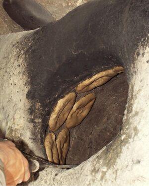 Sabur Achtari Tandoor Oven