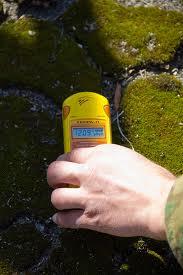 File:Chernobyl moss.jpg