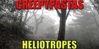 Heliotropes