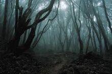 Dark Woods - End of the Road