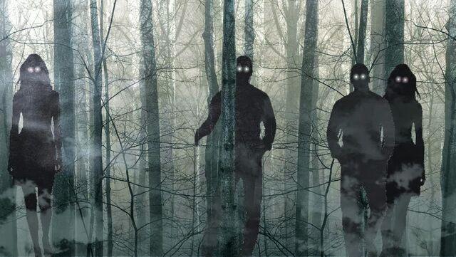 File:Woods background-twitter.jpg