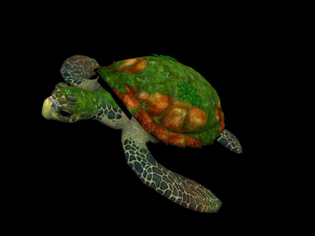 File:Turtle 06.png