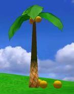 NG Palmtree