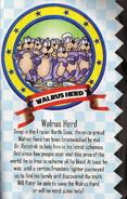 Vol-8-Walrus-Herd