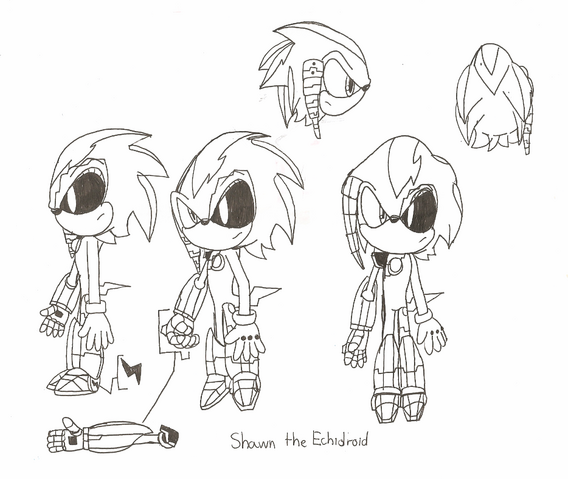 File:Shawn the Echidroid.png