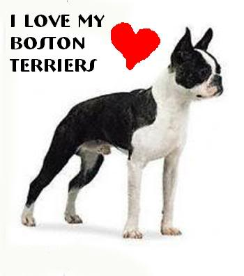 File:Bostonterrier.jpg