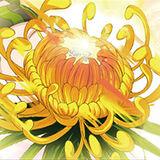 Singular Velvet Sky Chrysanthemum Mug