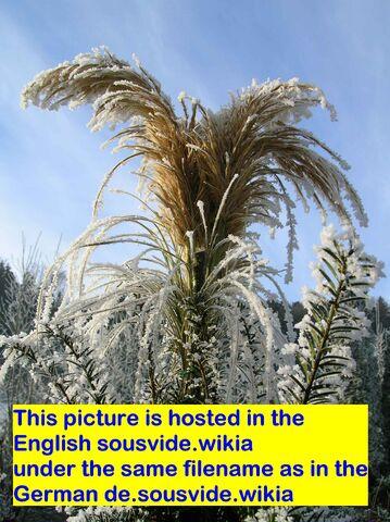 Datei:Sample picture.jpg