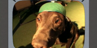 Animals Close-Up With a Wide-Angle Lens Wearing Hats