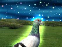 File:Pigeonmaster777.jpg