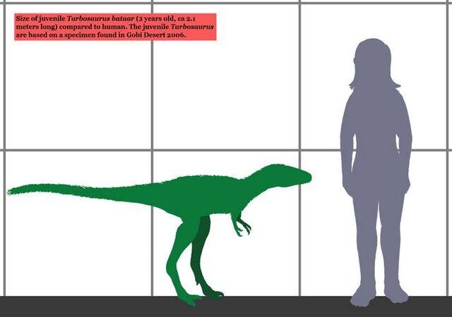 File:Young tarbosaur.jpg
