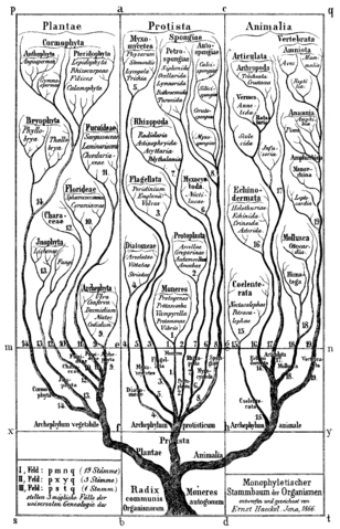 File:Haeckel Tree of life.png
