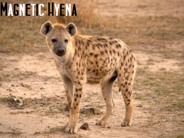 File:Magetic Hyena.png