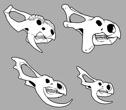 File:Skulls.jpg
